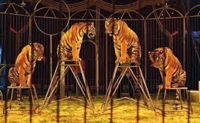 Foto: Ecología Blog