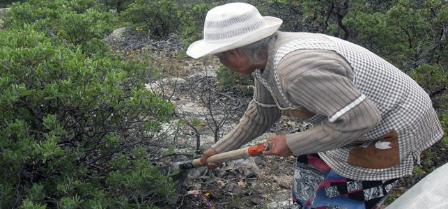 Foto: Gabriela Mendoza Vázquez CIMAC